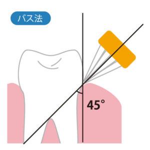 歯ブラシの当て方②