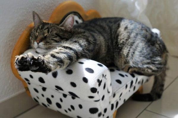 のびのびした猫