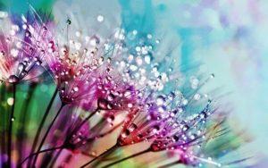 雨に濡れた美しい花